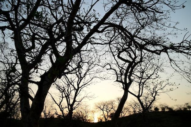 Krajobraz z sylwetką drzew o zachodzie słońca. krajobraz pod światło,