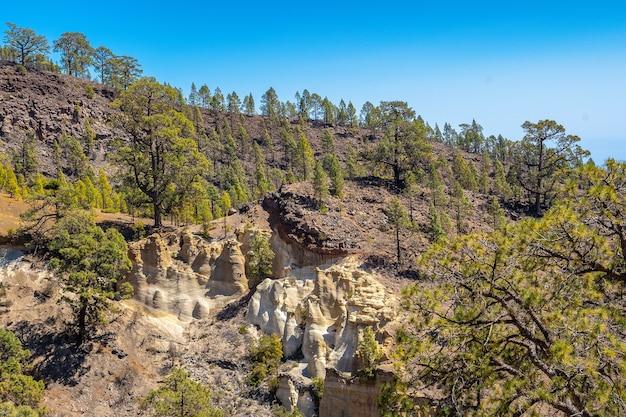 Krajobraz z trekkingu przez las wulkanu teide na teneryfie