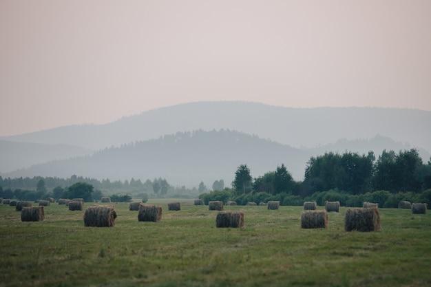 Krajobraz z widokiem na mgliste wzgórza i pole z rolkami siana.