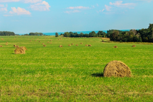 Krajobraz z widokiem na skoszone pole, a na nim stóg siana