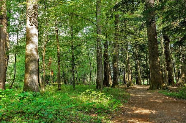 Krajobraz z wiejskimi drogami rozwidla w lesie