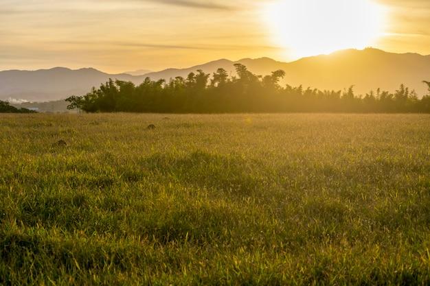 Krajobraz z zachodem słońca na pastwisku i górami w tle.