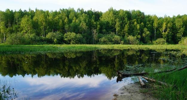 Krajobraz z zielonymi drzewami. letni wieczór w lesie.