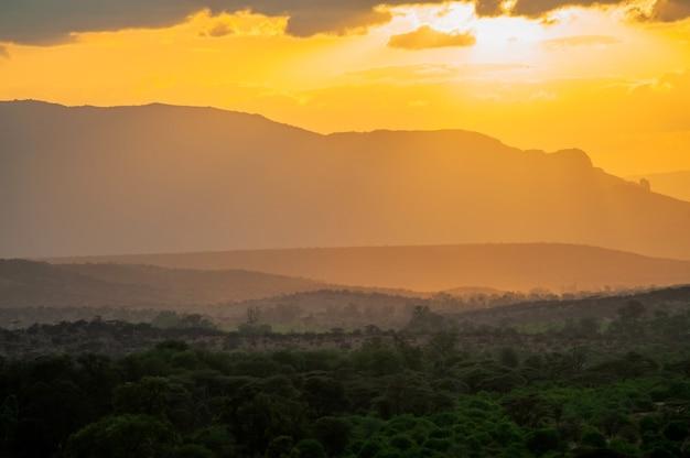 Krajobraz zachód słońca w parku narodowym w kenii. złote wieczorne światło