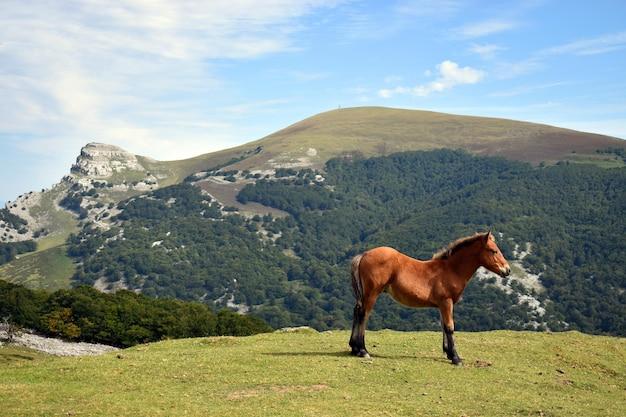 Krajobraz ze źrebakiem i górą gorbea. park przyrody gorbea. kraj basków. hiszpania