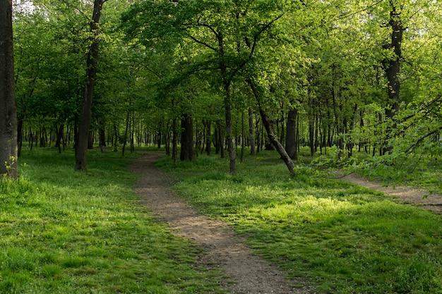 Krajobraz zielonego lasu, naturalny.