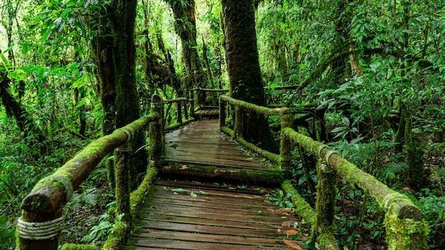 Krajobraz zielonego lasu. zielone liście rano