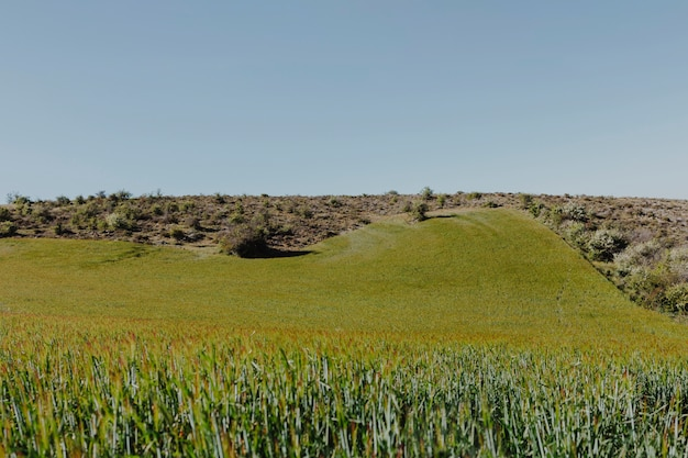 Krajobraz zielonego pola