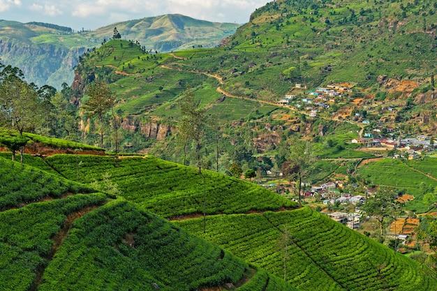 Krajobraz zielonych pól herbaty, region górski nuwara eliya na sri lance.