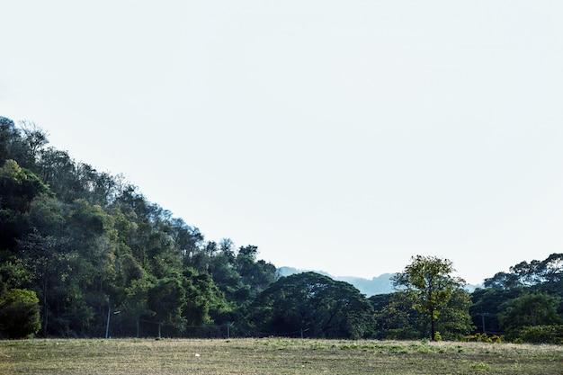Krajobrazowa góra z drzewem i jasnym niebem