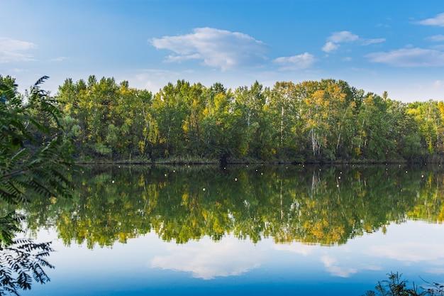 Krajobrazowe drzewa leśne w lustrzanym odbiciu wody