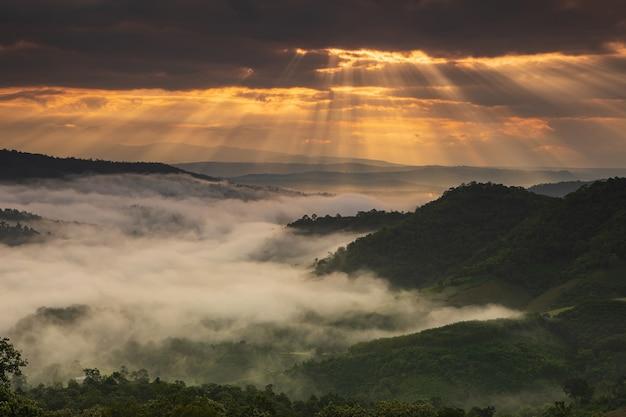 Krajobrazowe morze mgły