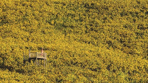 Krajobrazowego natura kwiatu tung bua tong słonecznika meksykański pole, mae hong syn, tajlandia
