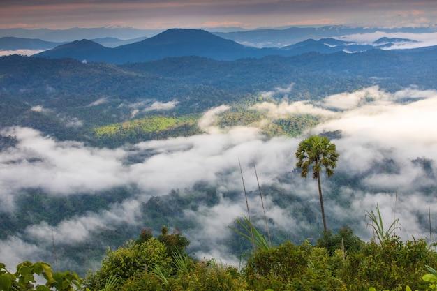 Krajobrazowy morze mgła na wysokiej górze w phitsanulok prowinci, tajlandia.
