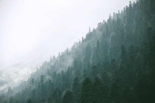 Krajobrazowy panoramiczny widok na zimowy las