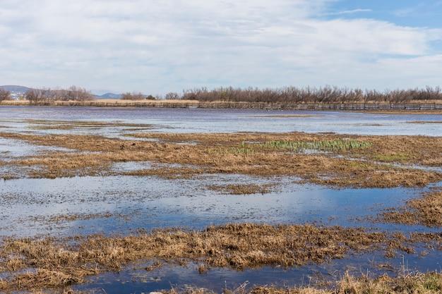 Krajobrazowy ryżu pole w naturalnym parku z odbiciem chmurnieje w wodzie