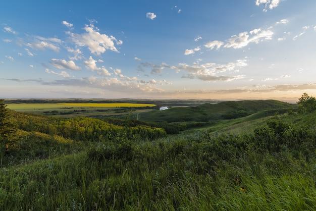 Krajobrazowy strzał traw pola i łąki pod jasnym błękitnym i różowym niebem z białymi chmurami