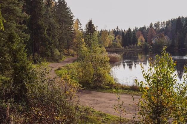 Krajobrazowy widok na brzeg stawu w pobliżu wiejskiej drogi i lasu rosja