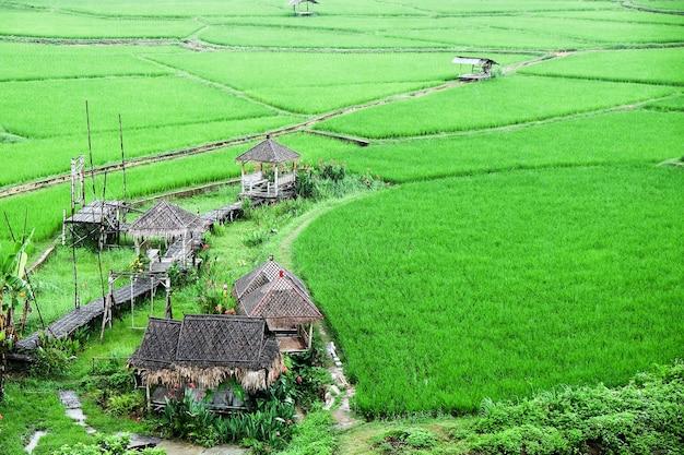 Krajobrazowy widok na zielone pole ryżowe