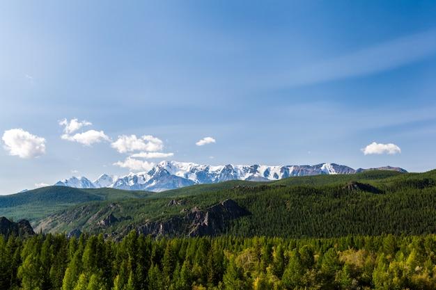 Krajobrazowy widok piękny świeży zielony las i ałtaj góry tło. panoramiczny widok na piękny zielony las w górach ałtaju