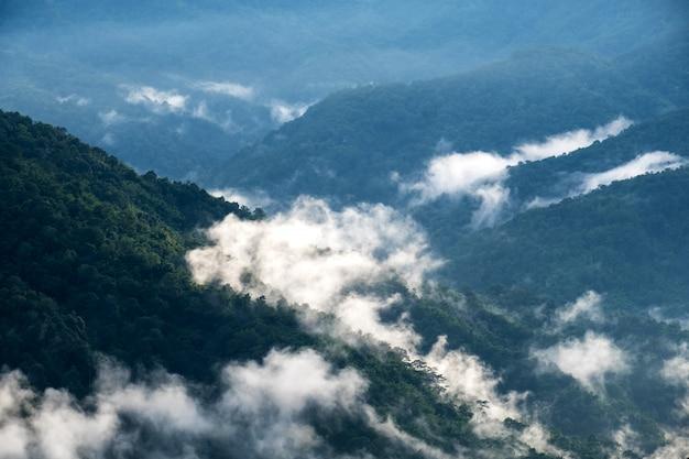 Krajobrazowy wizerunek zieleń tropikalnego lasu deszczowego wzgórza w mgłowym dniu