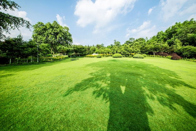 Krajobrazu trawiasta i zielonka? rodowiska parku tle