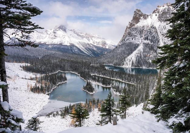 Krajobrazy płaskowyżu opabin i jeziora ohara zimą w parku narodowym yoho