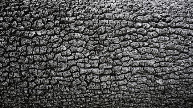 Krakingowy szorstki kory drzewa tło