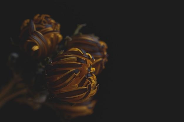 Krańcowy zbliżenie piękny dmuchający dandelion