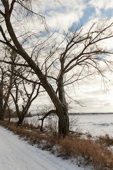 Krawędź drogi porośnięta drzewami bez liści