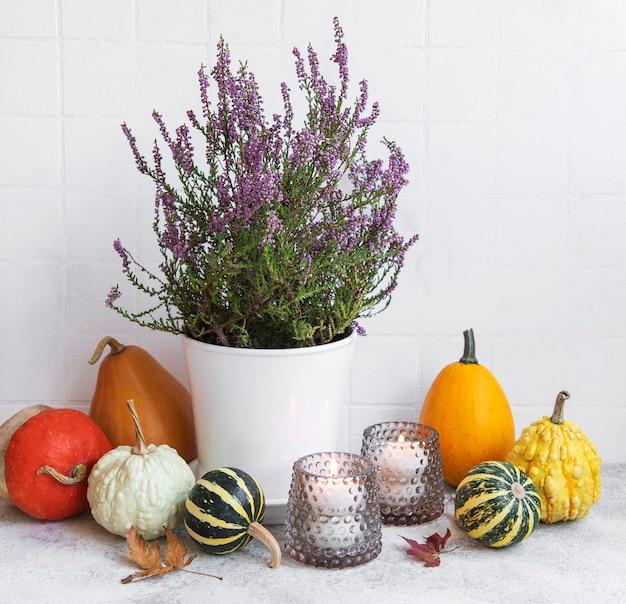 Kreatywna jesienna kompozycja na święto dziękczynienia z ozdobnymi pomarańczowymi dyniami, świecami i fioletowym wrzosem.