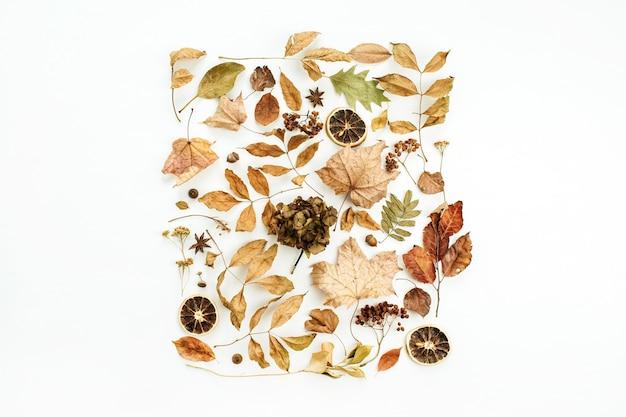 Kreatywna jesienna kompozycja z suchymi jesiennymi liśćmi na białej powierzchni