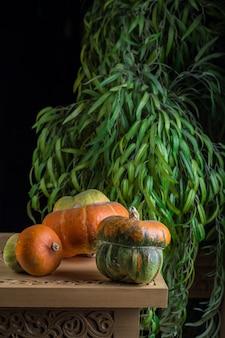 Kreatywna kompozycja z dyniami i zieleniną w studio. jesienna kompozycja