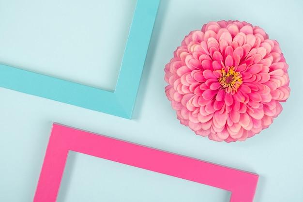 Kreatywna kompozycja złożona z jednego kwiatka i kolorowych ramek. flat lay widok z góry.