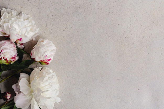 Kreatywna makieta kompozycja bieli z różowymi kwiatami piwonii na tle betonu gry w wieku.
