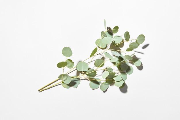 Kreatywna świąteczna kartka ze świeżą zieloną naturalną gałązką eukaliptusa na jasnoszarej ścianie z miękkimi cieniami, kopia przestrzeń.