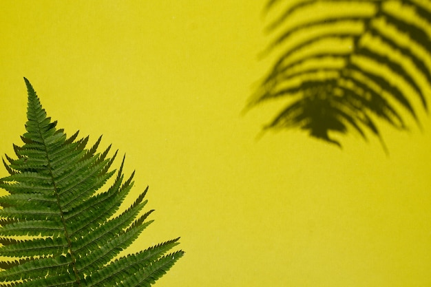 Kreatywne liście paproci z widokiem z góry z cieniem na żółtym tle papieru z przestrzenią do kopiowania w minimalistycznym stylu, szablon na napis, tekst lub projekt