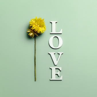 Kreatywne, płaskie ułożenie słowa miłość na zielono z naturalnymi roślinami.