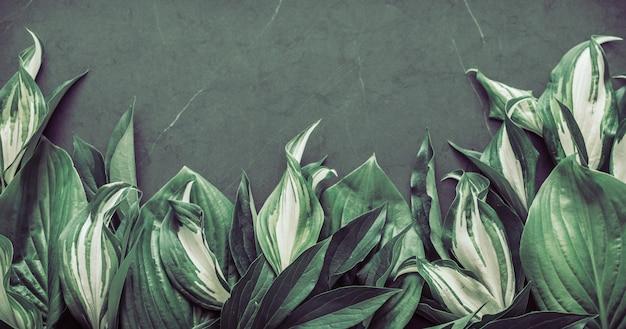 Kreatywne tekstury liści