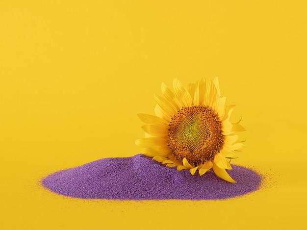 Kreatywne tło botaniczne wykonane ze świeżego żółtego słonecznika na jasnym żółtym tle.