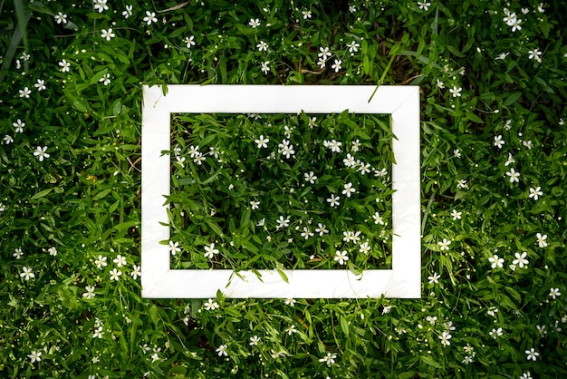 Kreatywne zielone tło kwiatowy naturalnych liści i trawy łąkowej z białą ramką na kopię miejsca.