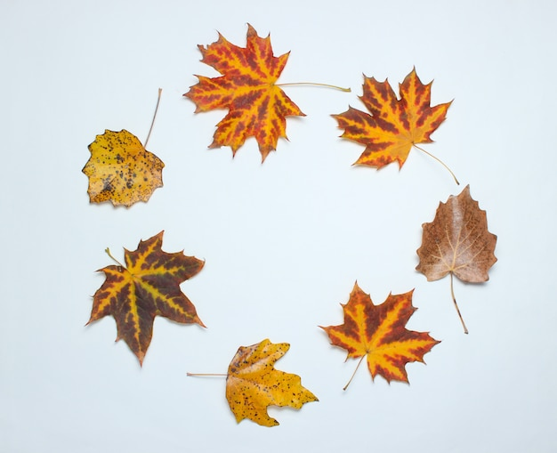 Kreatywnie okrąg spadać jesień liście na bielu. widok z góry