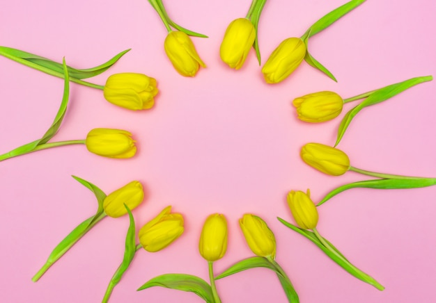Kreatywnie układ żółci tulipany na różowym tle.