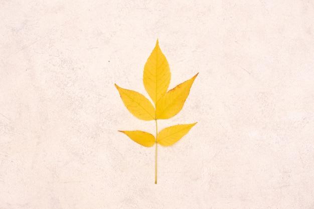 Kreatywny układ kolorowych liści jesienią. leżał płasko. koncepcja sezonu.