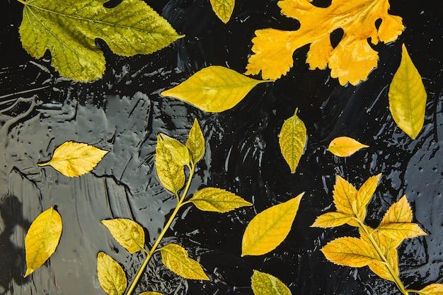 Kreatywny układ kolorowych żółtych liści jesienią.