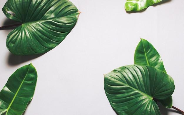 Kreatywny układ natury wykonane z tropikalnych liści i kwiatów. płaskie leżało. koncepcja lato.