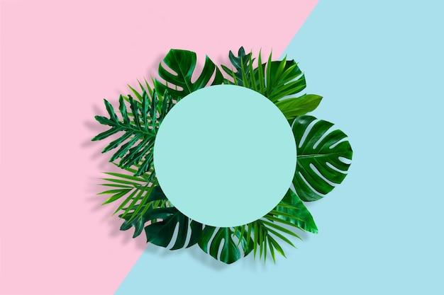 Kreatywny układ natury wykonany z tropikalnego liścia na pastelowym różowym i niebieskim tle