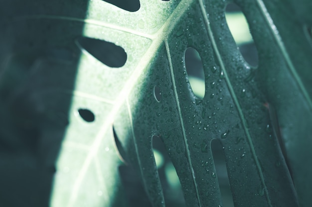 Kreatywny układ natury wykonany z tropikalnych liści i kwiatów. leżał płasko. koncepcja lato.