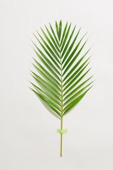 Kreatywny układ wykonany z kolorowych liści tropikalnych na białym tle. minimalne lato