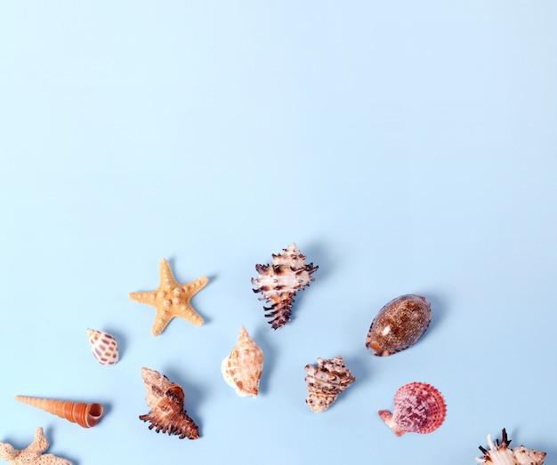 Kreatywny układ wykonany z różnych kolorowych muszli i karty z pozdrowieniami z napisem hello summer